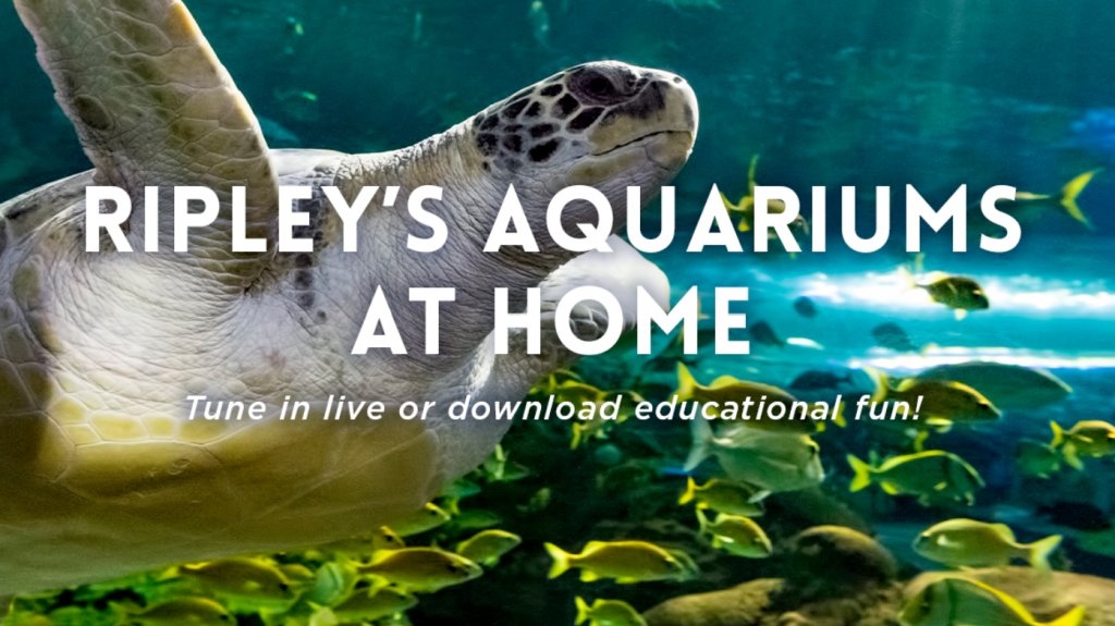 Ripley's Aquarium at home graphic with sea turtle and fish image