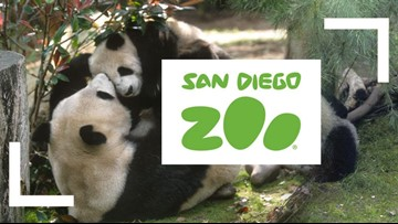 San Diego Zoo logo with pandas