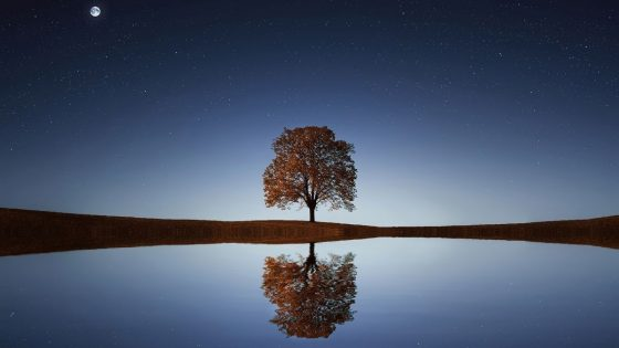 night sky photo of water with tree reflection